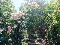 庭の手入れ・・・^^ - まったりゆっくり過ごす日々