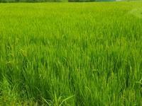 JA高知市無人ヘリ農薬散布情報⑬ - 化学物質過敏症・風のたより2