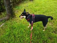リオ(犬)と散歩・・・農薬空気で大丈夫!? - 化学物質過敏症・風のたより2