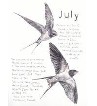 7月-ツバメが2回目の子育て中です! - ブルーベルの森-ブログ-英国のハンドメイド陶器と雑貨の通販