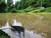 米作りへの挑戦!田植え(手植え)の様子その1:お米作りにこだわる理由! - FLCパートナーズストア
