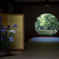 鎌倉紫陽花散歩 明月院 紫陽花以外で勝負です 18.06.05 10:32 - スナップ寅さんの「日々是口実」