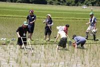 第14回 米酒の会 #2 【①草取りと生き物観察】2018年7月1日 - 無農薬で米作りから酒造りを楽しむ会 blog