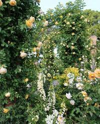 ガーデニング専門webサイトGarden Storyにて「横浜とバラの歴史を刻み続ける港の見える丘公園」がアップされました。 - 元木はるみのバラとハーブのある暮らし・Salon de Roses