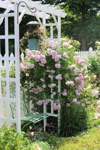 レイニーブルーと上品なマダム - ペコリの庭 *