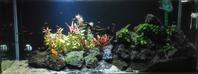 水換えとちょっとトリミング - もらった植物を育ててみた。けど、今はアクアリウムが面白い!