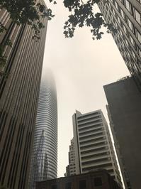 飲茶@霧の街?サンフランシスコ - 幾星霜