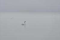 雨が多いよ!~今週のウトナイ湖 - やぁやぁ。