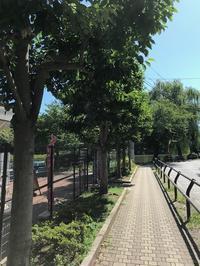 ●久々、石神井公園散歩 - 太陽と大地のエクボ3