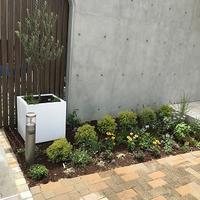 オリーブの木とハーブのある花壇 - 緑のしずく (ベランダガーデン便り)