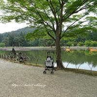 日本庭園散歩☆朝食セット - 狆の茶々丸