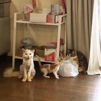 カメラを見つめるおかき。 - ぶつぶつ独り言2(うちの猫ら2018)