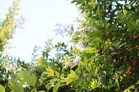 綺麗な花の下は、恐ろしい・・・。 - イルモランド irumoland -イルモ公式ブログ-
