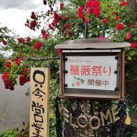 だんとコーヒー * 薔薇祭りの最後にお伺いしました♪ @小諸 - ぴきょログ~軽井沢でぐーたら生活~