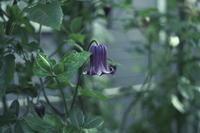 My Garden July - aya's photo