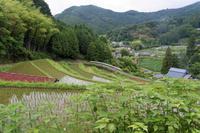 水田のある風景 - katsuのヘタッピ風景