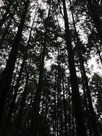 森の中 - 帽子工房 布布