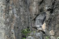 北海道遠征6 ハヤブサ - 比企丘陵の自然