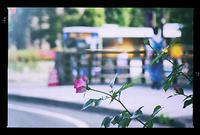くまもと初夏・梅雨時の花々 - 前田画楽堂本舗