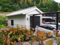 裏山の鯉のぼりと、倉庫。 - Photo*Today & Then