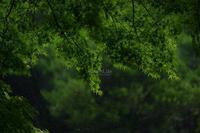 雨音 - GreenLife