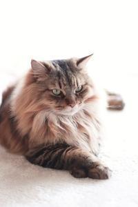 その後のユウちゃんと今月の5猫集合写真 - きょうだい猫と仲良し暮らし