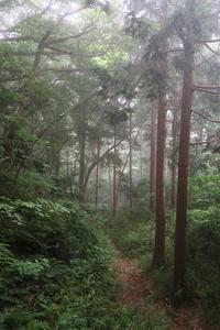 芦ノ湖西側稜線コースを歩くその2 - 季節(いま)を求めて