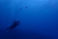 18.7.4 本部(もとぶ)の海でスズメ追い - 沖縄本島 島んちゅガイドの『ダイビング日誌』