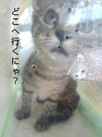 すずめ大阪へ - 素人木工雑貨と犬猫日記