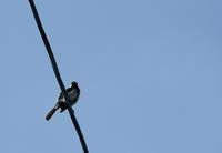 電線の鳥さん。 - 蓮華寺池の隣5