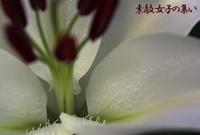 公園の花~百合 - ♪Princess Craft  シニア素敵女子の集い