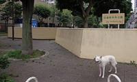 Vol.1358 日進町中央公園 - 小太郎の白っぽい世界