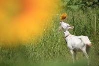 黄色い香り - Bigstone 花空街フォトギャラリー