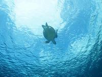 透明度、絶好調~\(^o^)/底土で3ダイブ♪ - 八丈島ダイビングサービス カナロアへようこそ!