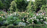 Garden Storyさんにて「横浜とバラの歴史を刻み続ける横浜山手の港の見える丘公園」の記事が掲載されました。 -  日本ローズライフコーディネーター協会