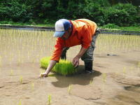 米作りへの挑戦!田植え(手植え)の様子 その3:ひとり農業!1苗1苗黙々と、声かけながら・・・ - FLCパートナーズストア