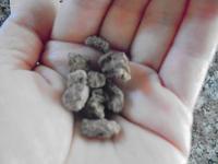 エクーアオーガニック カカオニブココナッツシュガーコーティングは、自然食品 - 初ブログですよー。