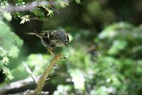 富士山近郊 Ⅱ - Bird Healing