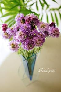 スカビオサ - Pastel green - Flower diary
