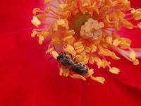 ツルバラに小さな蜂のお客様♪ - 窓の向こうに