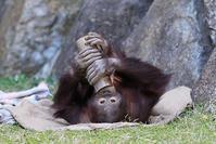 7月5日(木)敗北 - ほのぼの動物写真日記