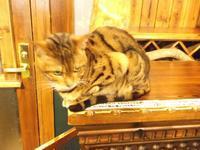 デヴィッド・ボウイ:ヒストリー1971-1974 - シェークスピアの猫
