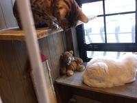 カズオ・イシグロ「日の名残り」 - シェークスピアの猫