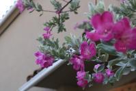 夏バテ知らず - CHIROのお庭しごと