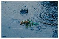 大雨の知らせ。 - Yuruyuru Photograph