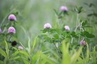 可憐な花とともに時を・・・・・! - 一場の写真 / 足立区リフォーム館・頑張る会社ブログ