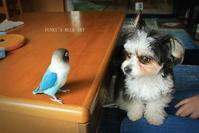 B.B & Chipo* とっても自由人(鳥) - FUNKY'S BLUE SKY
