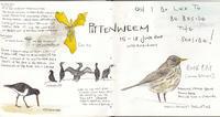スコットランドのファイフ沿岸のさんぽみち -ハナさんブログより- - ブルーベルの森-ブログ-英国カントリーサイドのライフスタイルをつたえる