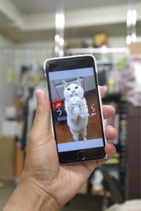 電子版 - ぶつぶつ独り言2(うちの猫ら2018)
