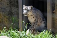 ミルチャの狩り - 動物園に嵌り中
